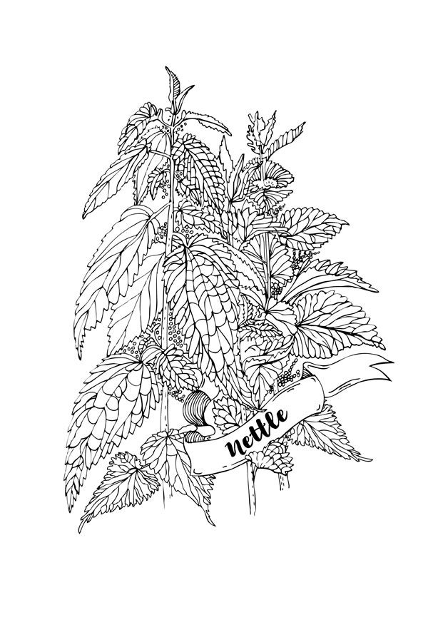 coloring-page-nettle-herb